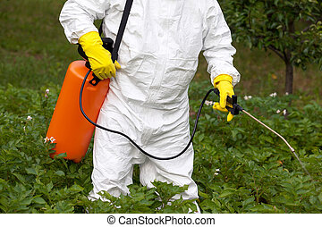 Pesticide spraying. Non-organic vegetables. - Man spraying...