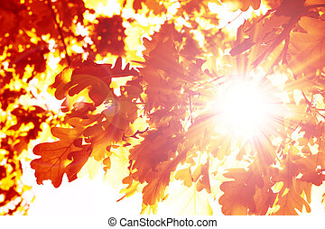 Autumn - Sun beams and autumn leaves