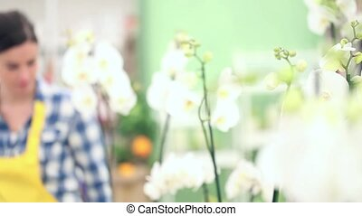 florist woman walking in shop, gets up and checks a pot of...
