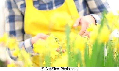 springtime, woman in garden touches