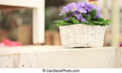 garden springtime concept, woman florist