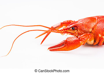Red crayfish isolated on a white background