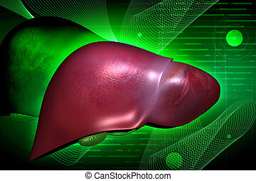 liver - Highly quality of rendering liver in color...