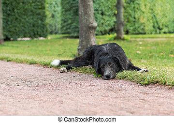Lonely black dog with sad eyes is laying and waiting someone...