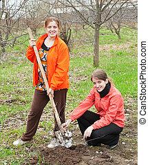 women resetting bush sprouts - Two young women resetting...