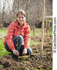 woman resetting raspberry sprouts - young woman resetting...