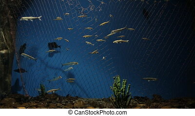 Many kinds of fish swim in beautifully decorated aquarium