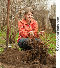 woman resetting bush sprouts - young woman resetting bush...