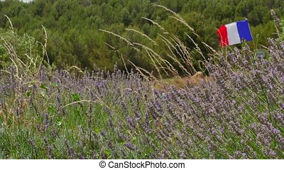 Lavender Field And French Flag - French flag flying in a...