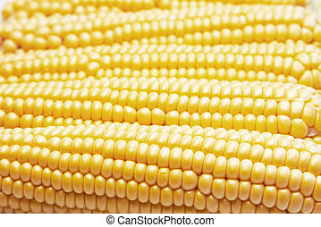 Fresh sweetcorn - Freshly harvested sweetcorn as a...
