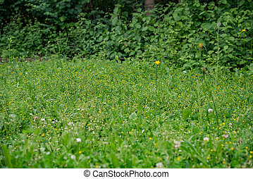 summer green meadow background