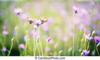 Rural landscape with wild flowers in meadow. Beautiful spring background.