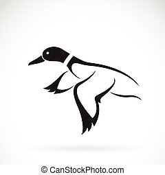 Vector of flying wild duck design on white background.
