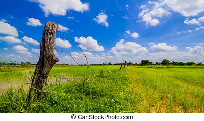 Dramatic clouds sky over green paddy field
