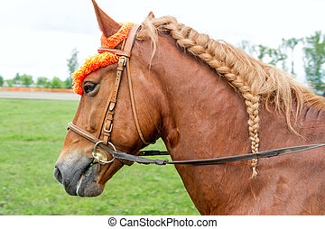Horse with a braided mane - Chestnut horse with a braided...