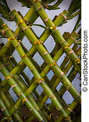 Lucky Bamboo Plant - Asian lucky green bamboo plant pattern...
