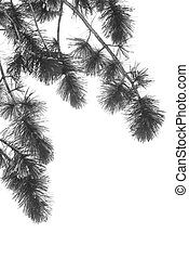 Pine Tree Branch with Snow