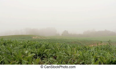 field with lake covered with fog