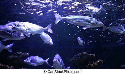 School of fishes underwater