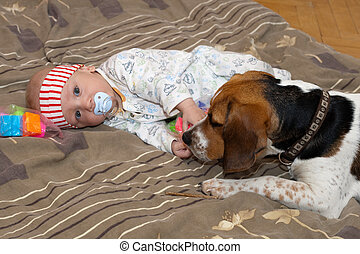 Baby plays with a dog - Baby boy plays with a beagle dog
