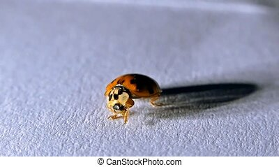 Ladybird close-up. ladybug on the white background