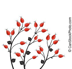 Vector rose hip - Vector illustration rose hip, silhouette...