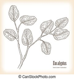 Hand drawn eucalyptus leaves. Vector illustration