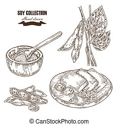 Hand drawn soy plant, soybeans and tofu Vector illustration