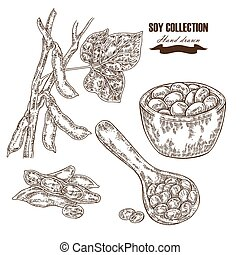 Hand drawn soy plant, soybean, wooden scoop with beans. Vector illustration