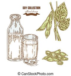 Hand drawn soy plant and soy milk. Vector illustration