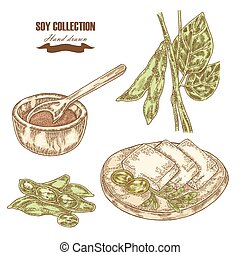 Hand drawn soy plant, soybeans and tofu. Vector illustration
