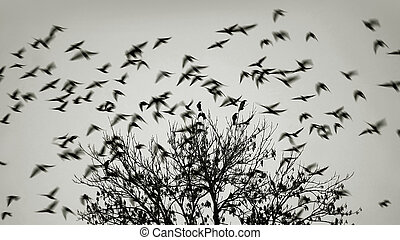 Birds flying away from the tree