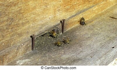 Bees coming in and out of a wooden beehive