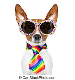 gay pride dog - crazy funny gay dog proud of human rights ,...