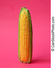 Single ear of corn with leaves on a  pink background