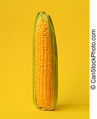 Single ear of corn with leaves on a yellow background
