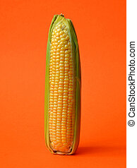 Single ear of corn with leaves on orange colored background