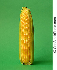 Single ear of corn with leaves on a green background