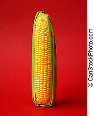 Single ear of corn with leaves on a red background