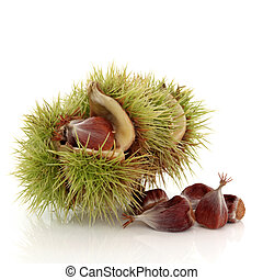 Beech Nuts - Beech nut in a husk with nuts scattered,...