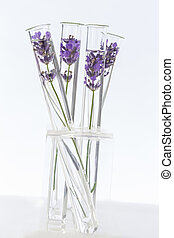 cosmetology lab Lavender Flowers in test tubes