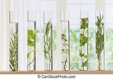 Flowers and plants in test tubes for scitific experiment