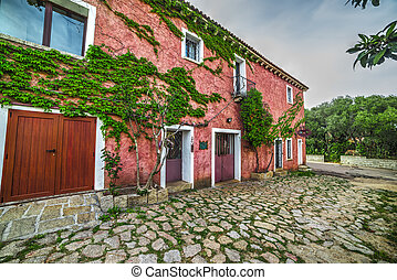 ivy leaves on a pink facade in San Pantaleo, Sardinia