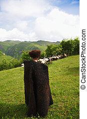 Shepherd herding sheep - Shepherd herding a flock of sheep...