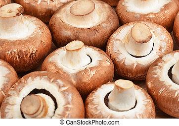 Champignon True mushroom - Fresh, raw and whole champignon...