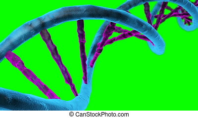 Animated DNA chain. Rotation DNA. Seamless loop