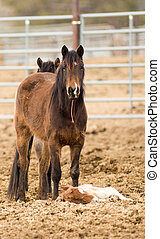 Horse Mother Stands over Tired Colt Foal Offspring