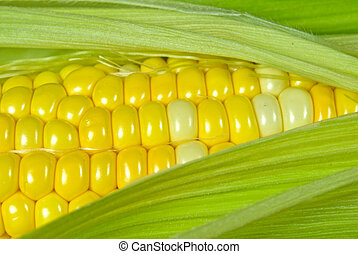 Sweet Corn - Extreme close-up of sweet corn