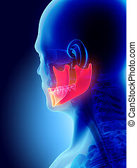 3D illustration of Mandible, medical concept. - 3D...