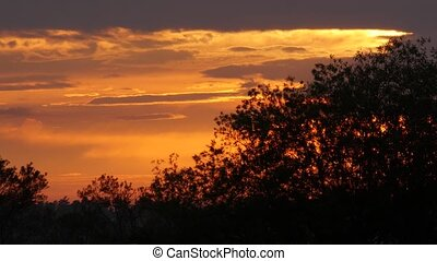 tree silhouettes against sunset background - black trees...